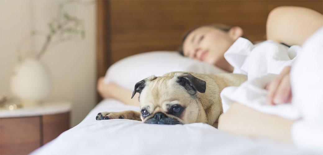 Duže spavanje je opasno