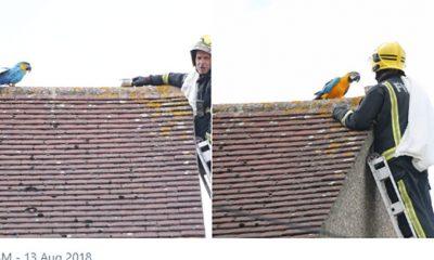 Vatrogasac skidao papagaja sa krova  %Post Title