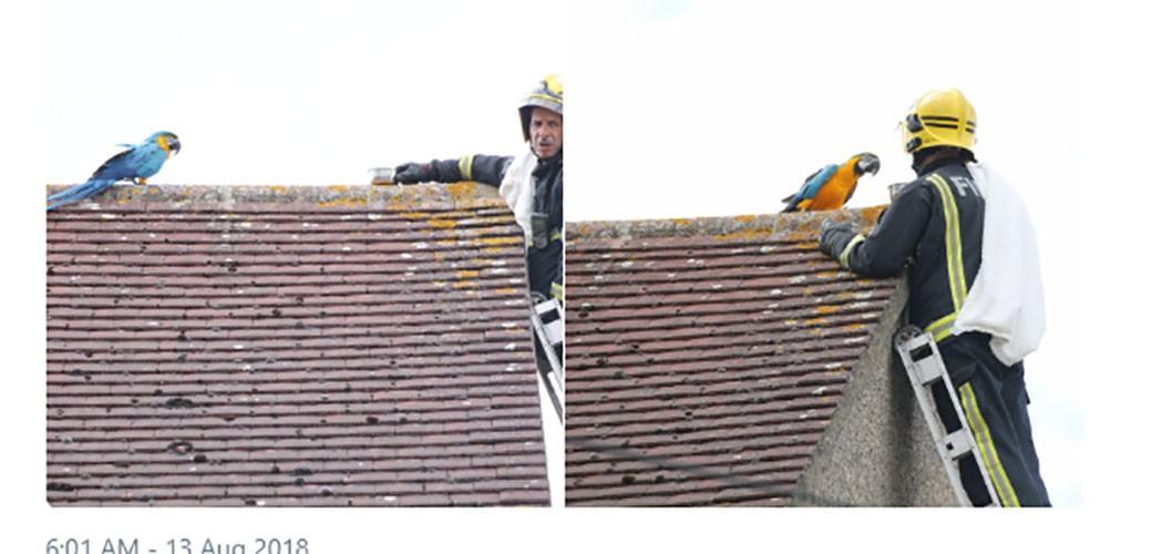 Vatrogasac skidao papagaja sa krova