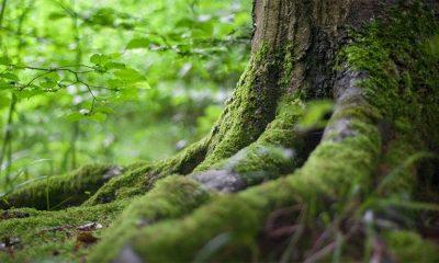 Kako prepoznati jestive biljke u prirodi  %Post Title