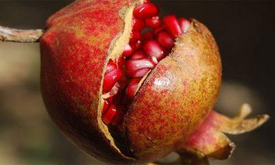 Zašto je nar najbolje jesenje voće  %Post Title