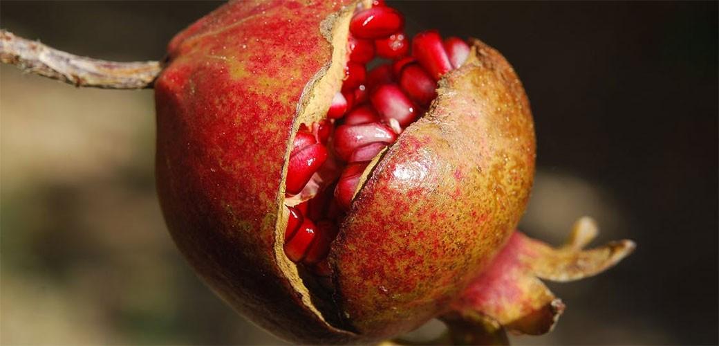 Zašto je nar najbolje jesenje voće