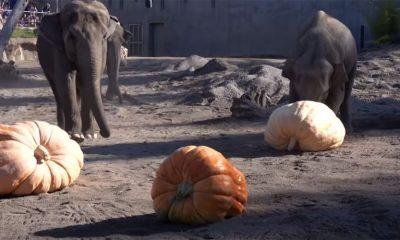 I slonovi slave Noć veštica