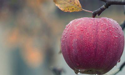 Jabuke su stvarno rajsko voće