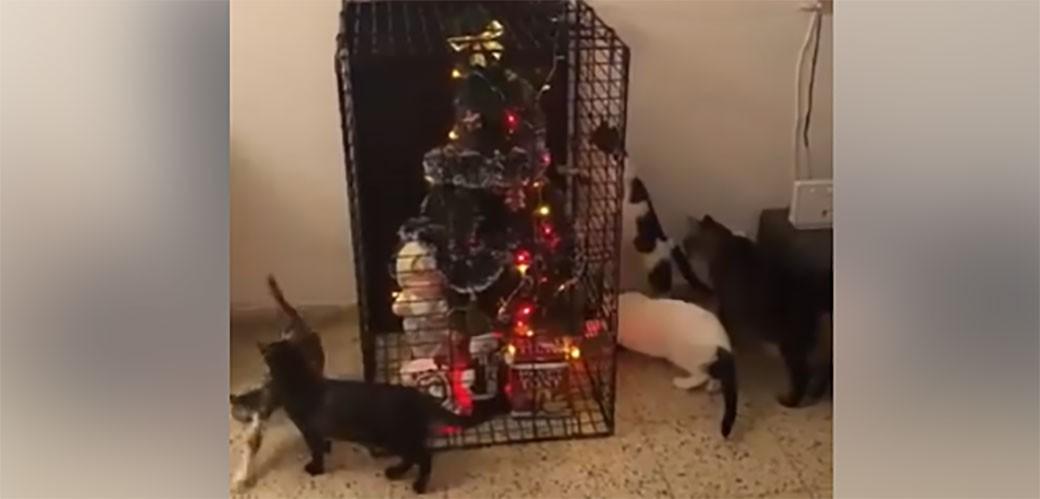 Kako da novogodišnja jelka preživi mačke