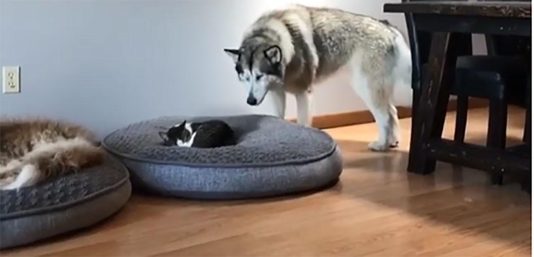 Pas otkrio da mu je mačka zauzela omiljeno mesto