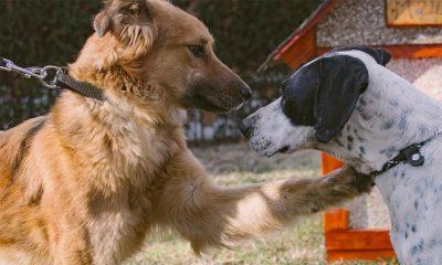 Akcija udomljavanja nezbrinutih životinja ove subote u Beogradu