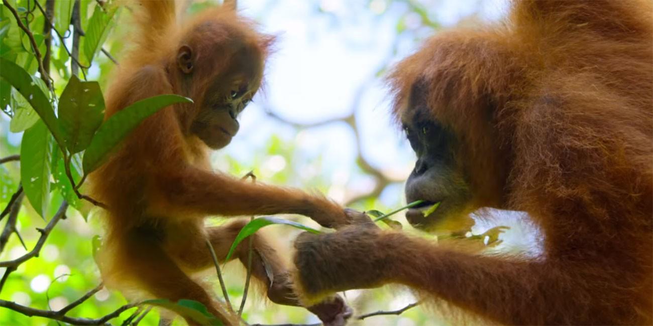 Naša planeta Davida Attenborougha – Prvi trailer