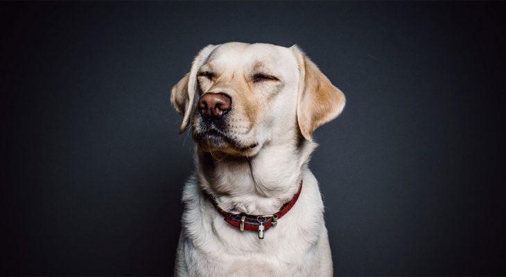 Istina je: Kakav vlasnik takav pas