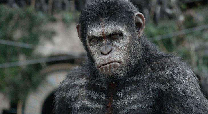 Naučnici napravili super pametne majmune
