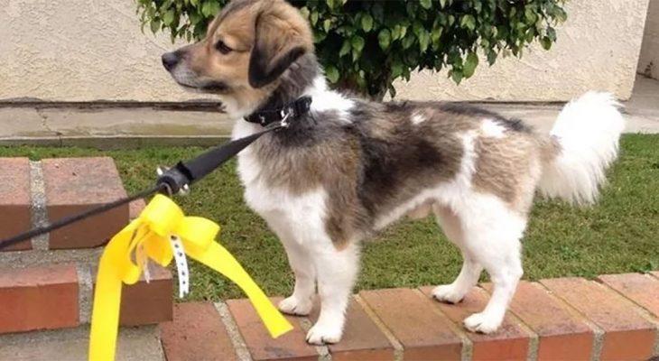 Šta znači žuta traka na povocu pasa?