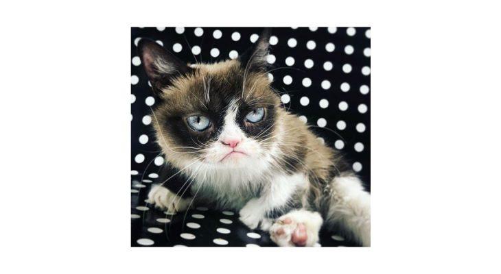 O ne: Umrla je Grumpy Cat