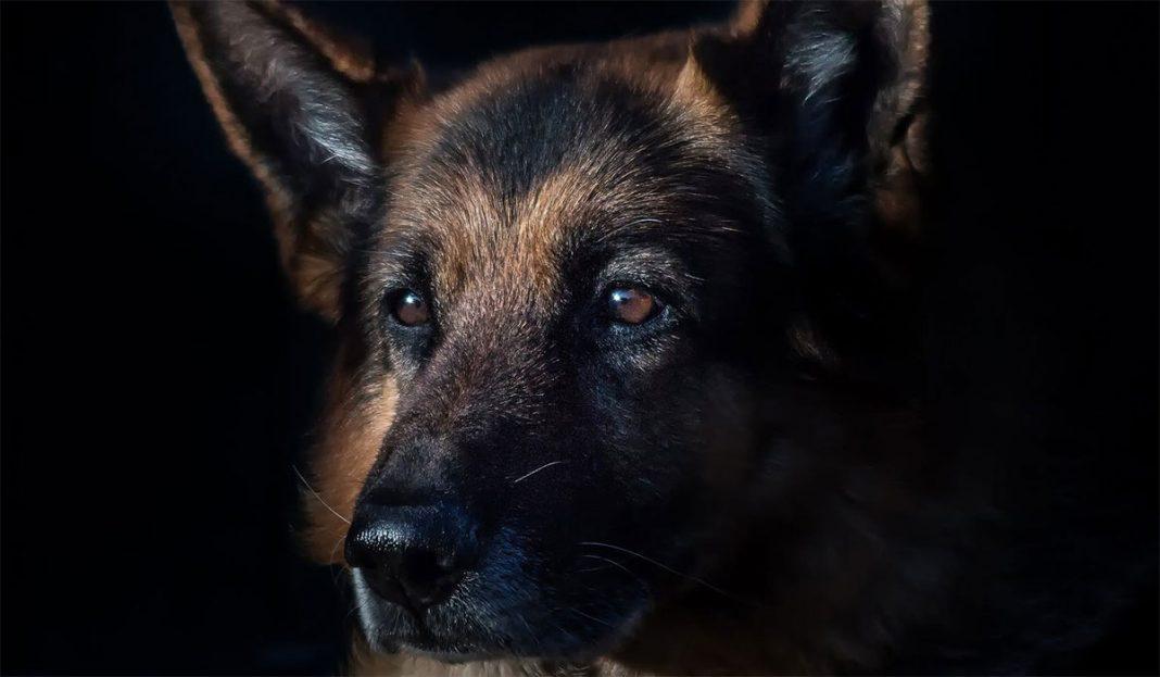 najstariji-pas