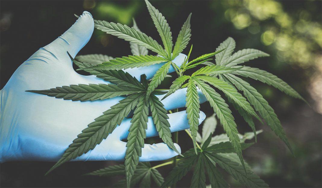 marihuana-lek-za-koronu